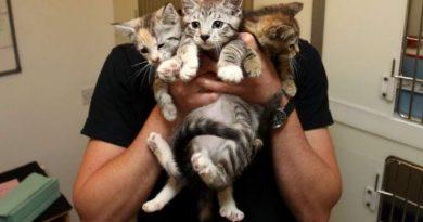 ALERTA DE BOLNAV PSIHIC: Un tânăr adopta pisici de pe Facebook, apoi le ucide